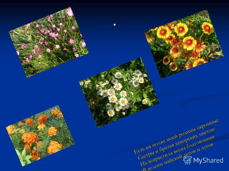 . Есть на полях моей родины скромные Сестры и братья заморских цветов: Их возрастила весна благовонная В зелени майской лесов и лугов