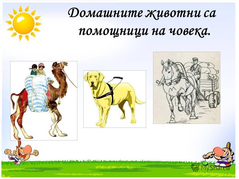 Домашните животни са помощници на човека.