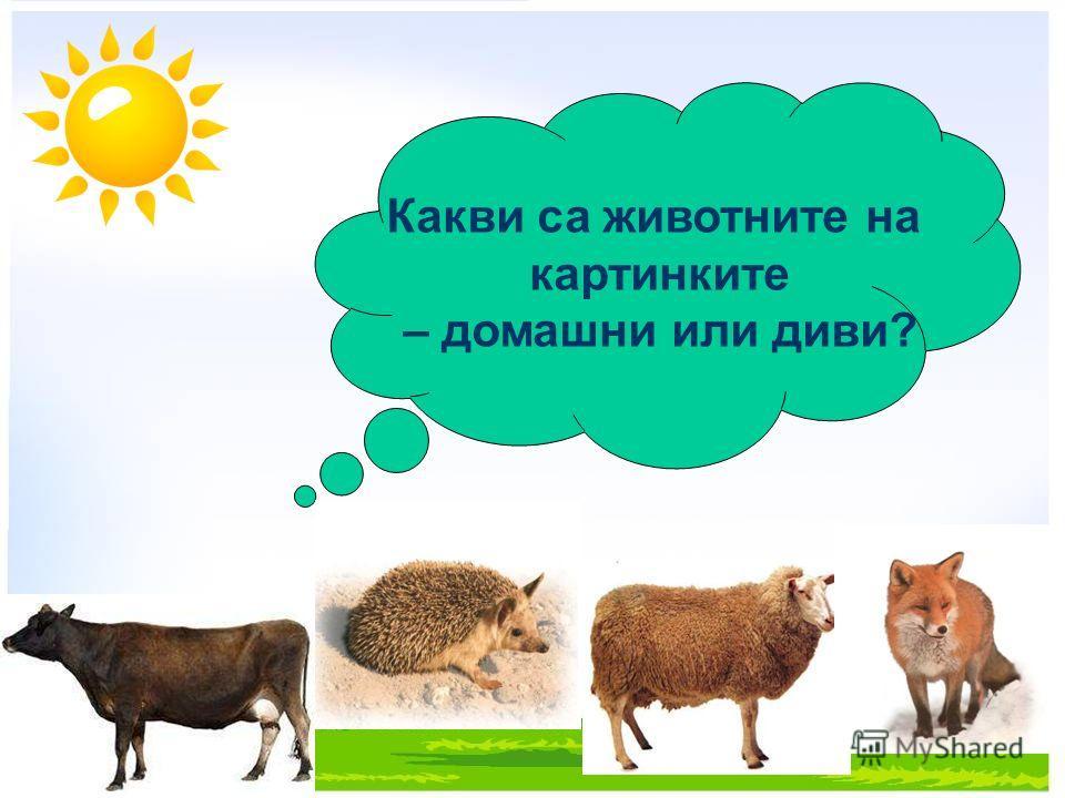 Какви са животните на картинките – домашни или диви?