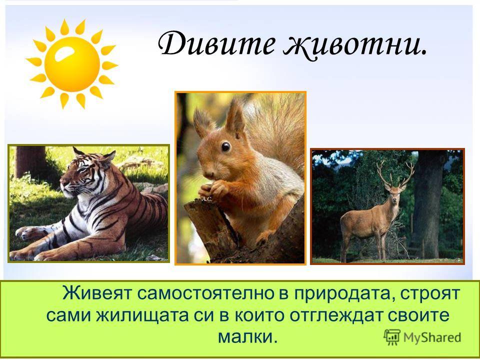 Дивите животни. Живеят самостоятелно в природата, строят сами жилищата си в които отглеждат своите малки.