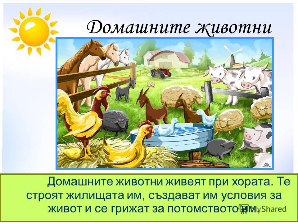 Домашните животни Домашните животни живеят при хората. Те строят жилищата им, създават им условия за живот и се грижат за потомството им.