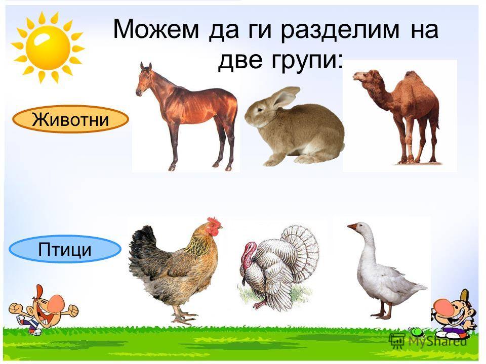 Животни Птици Можем да ги разделим на две групи: