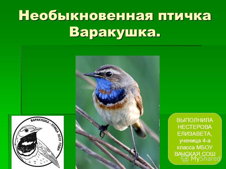Необыкновенная птичка Варакушка. ВЫПОЛНИЛА НЕСТЕРОВА ЕЛИЗАВЕТА, ученица 4-а класса МБОУ ВАЧСКАЯ СОШ