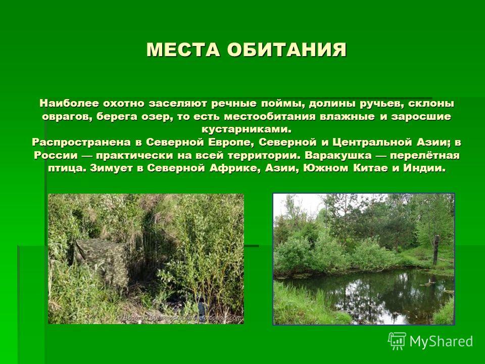 МЕСТА ОБИТАНИЯ Наиболее охотно заселяют речные поймы, долины ручьев, склоны оврагов, берега озер, то есть местообитания влажные и заросшие кустарниками. Распространена в Северной Европе, Северной и Центральной Азии; в России практически на всей терри