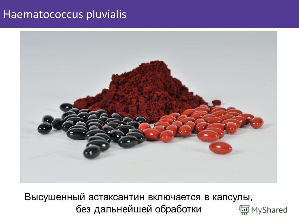 Высушенный астаксантин включается в капсулы, без дальнейшей обработки Haematococcus pluvialis