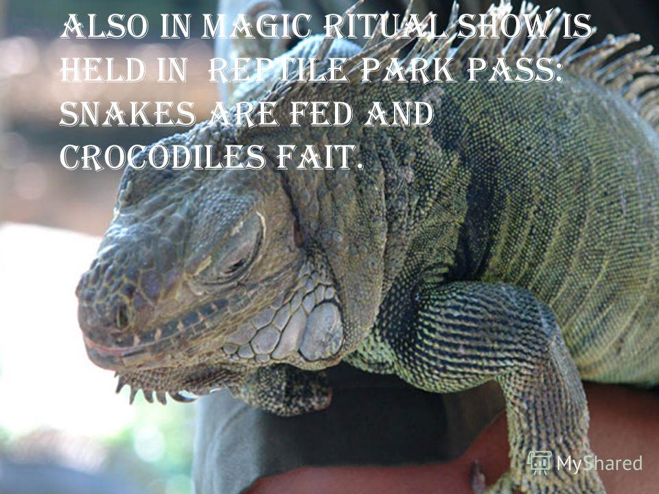 It is also represented various types of crocodile, lizards and snakes