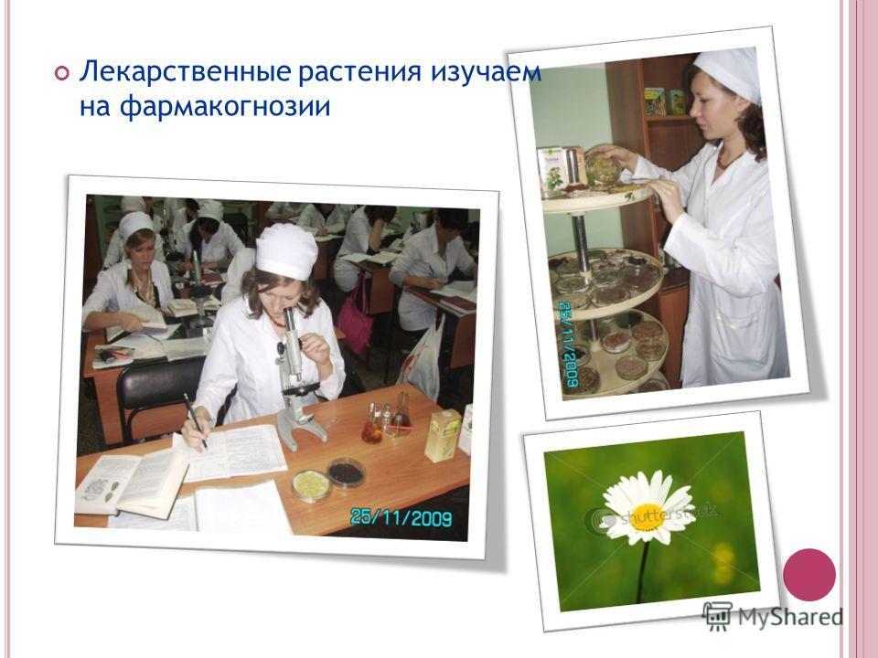 Лекарственные растения изучаем на фармакогнозии