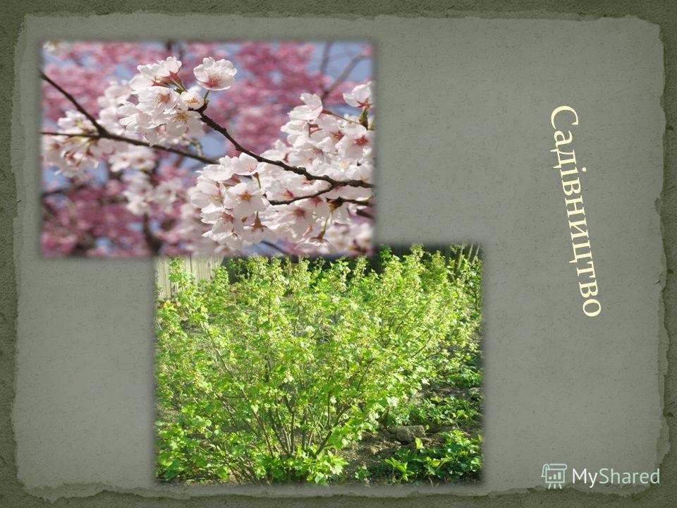 Садівництво