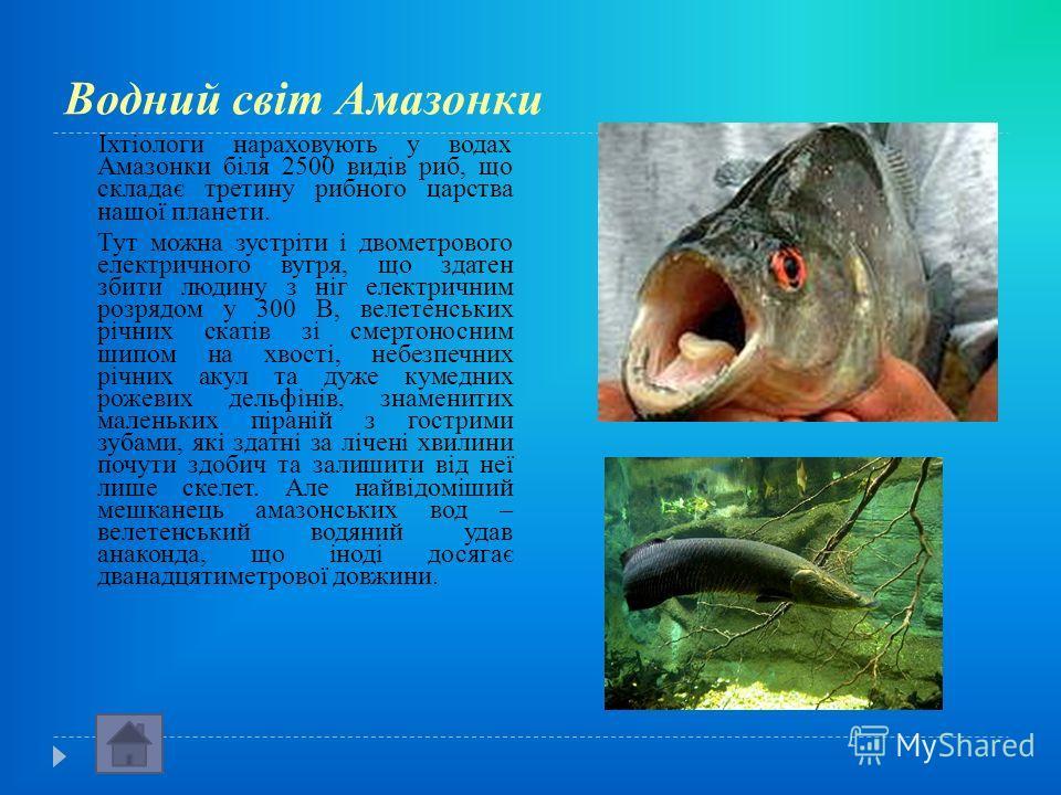 Водний світ Амазонки Іхтіологи нараховують у водах Амазонки біля 2500 видів риб, що складає третину рибного царства нашої планети. Тут можна зустріти і двометрового електричного вугря, що здатен збити людину з ніг електричним розрядом у 300 В, велете