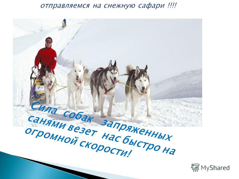 Солнце, снег и огромное количество удовольствия Это Ваш входной билет в особенную страну переживания зимы!!!!