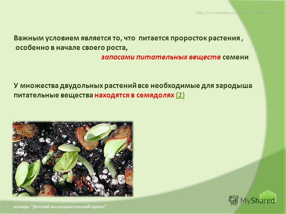 Важным условием является то, что питается проросток растения, особенно в начале своего роста, запасами питательных веществ семени У множества двудольных растений все необходимые для зародыша питательные вещества находятся в семядолях (2)(2) http://ww