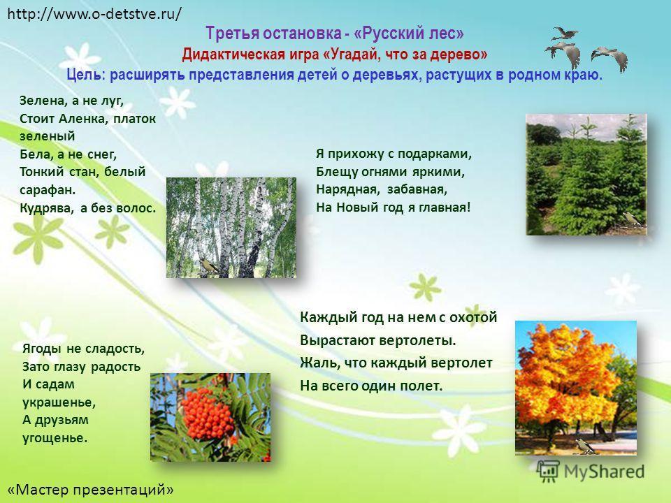 Третья остановка - «Русский лес» Дидактическая игра «Угадай, что за дерево» Цель: расширять представления детей о деревьях, растущих в родном краю. Каждый год на нем с охотой Вырастают вертолеты. Жаль, что каждый вертолет На всего один полет. Зелена,