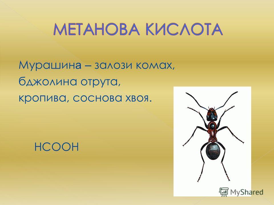 Мурашин а – залози комах, бджолина отрута, кропива, соснова хвоя. HCOOH