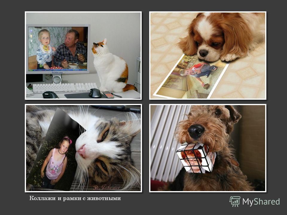 Коллажи и рамки с животными