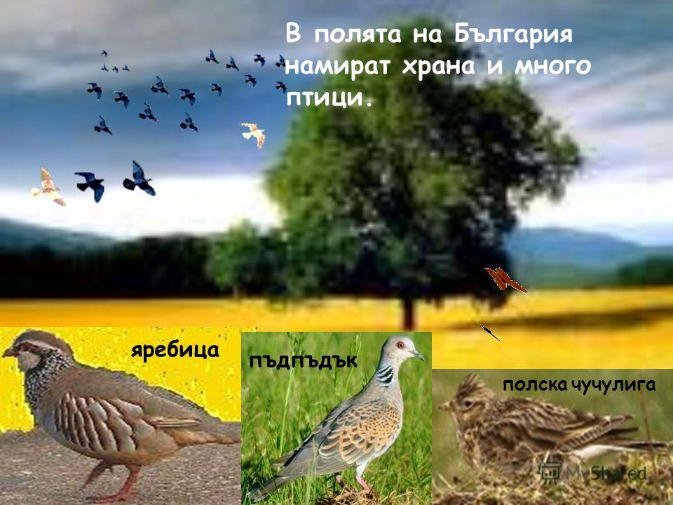 Полетата и равнините на България изобилстват от храна и вода за много животни. Лалугерът, полската мишка и бръмбара-рогач можем да видим край житните ниви. В тревата на полето ще забележим как мравките все бързат за някъде. Можем да си намерим и хван