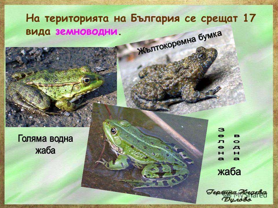 Земноводните се размножават с яйца, които снасят във водна и по изключение във влажна среда. От хайверните зрънца се развиват ларви. яйца на жаба попови лъжички