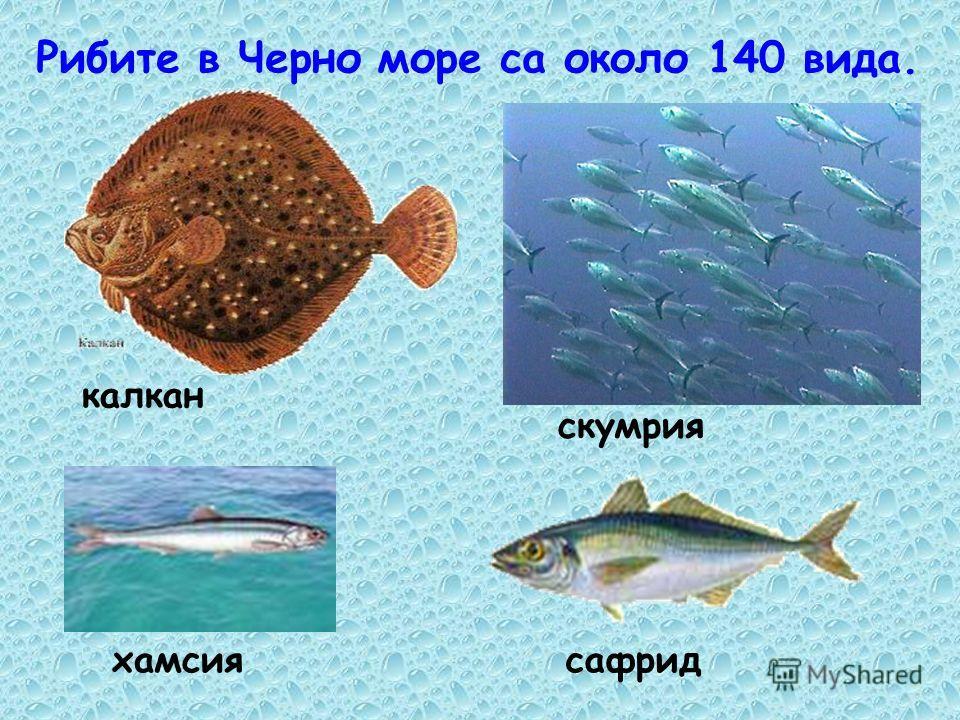 Животните в Черно море