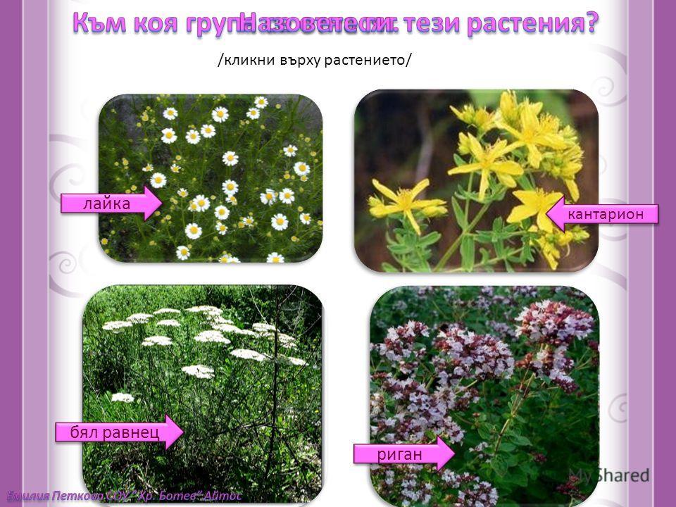 дървета храсти тревиститревисти тревиститревисти /кликни върху растението/