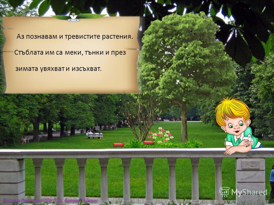 Мила Лена, Бяхме с батко Момчил в Борисовата градина.Той ми обясни как да различа- вам дърветата от храстите. Стъблото на дърветата е по-дебело от това на храстите. То се разклонява високо над земята, а храстите се разклоняват в ос- новата си.