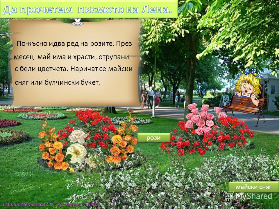 Скъпи Иво, Морето привлича много летовници в Бургас. Затова в Морската градина се отглеждат най-различни цъфтящи гра- дински растения. През пролетта цъфтят нарциси, лалета и теменужки. нарциси лалета теменужки