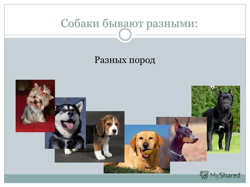 Собаки бывают разными: Разных пород