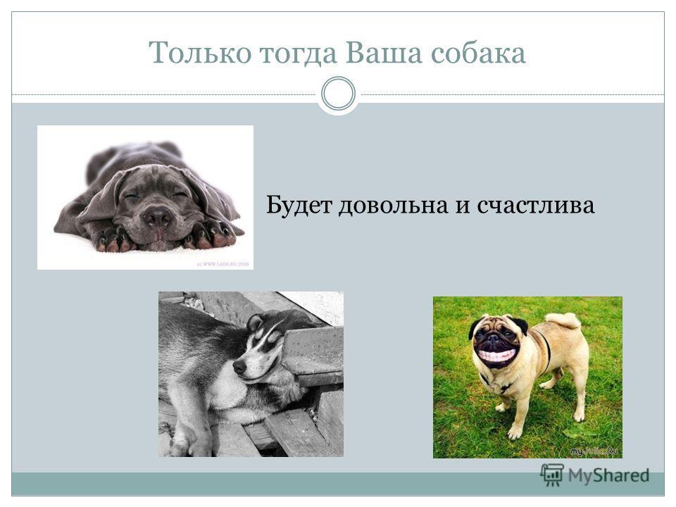 Только тогда Ваша собака Будет довольна и счастлива