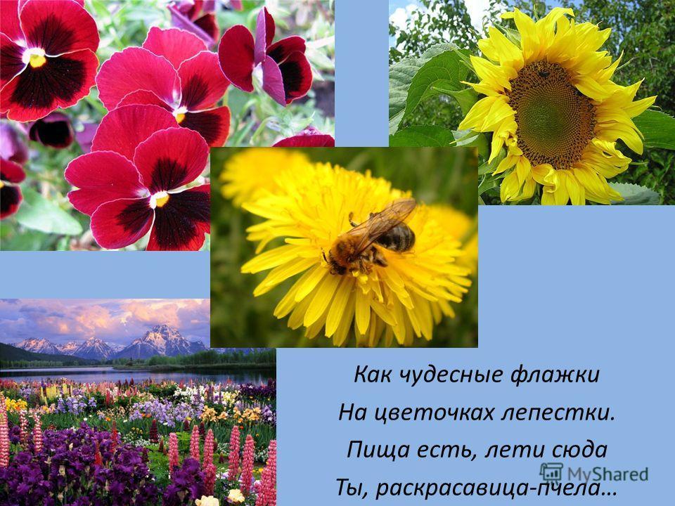 Как чудесные флажки На цветочках лепестки. Пища есть, лети сюда Ты, раскрасавица-пчела…