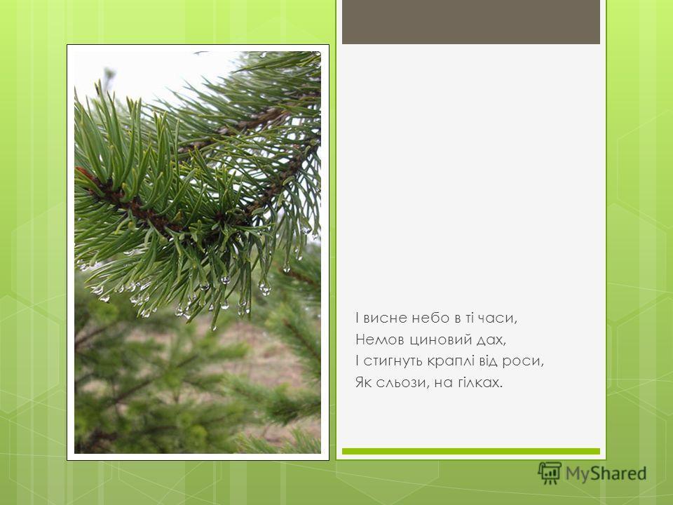 Морозний вітер в гай і ліс Подув з холодних міст Й нещадно з дерева обніс Червоно-жовтий лист.