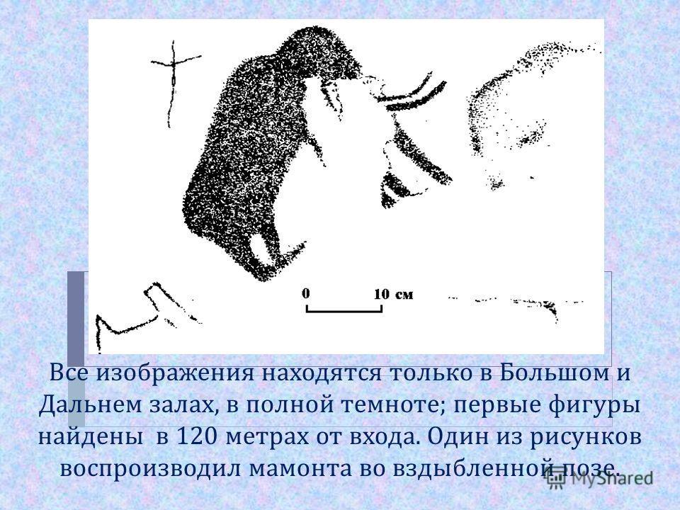 Все изображения находятся только в Большом и Дальнем залах, в полной темноте ; первые фигуры найдены в 120 метрах от входа. Один из рисунков воспроизводил мамонта во вздыбленной позе.