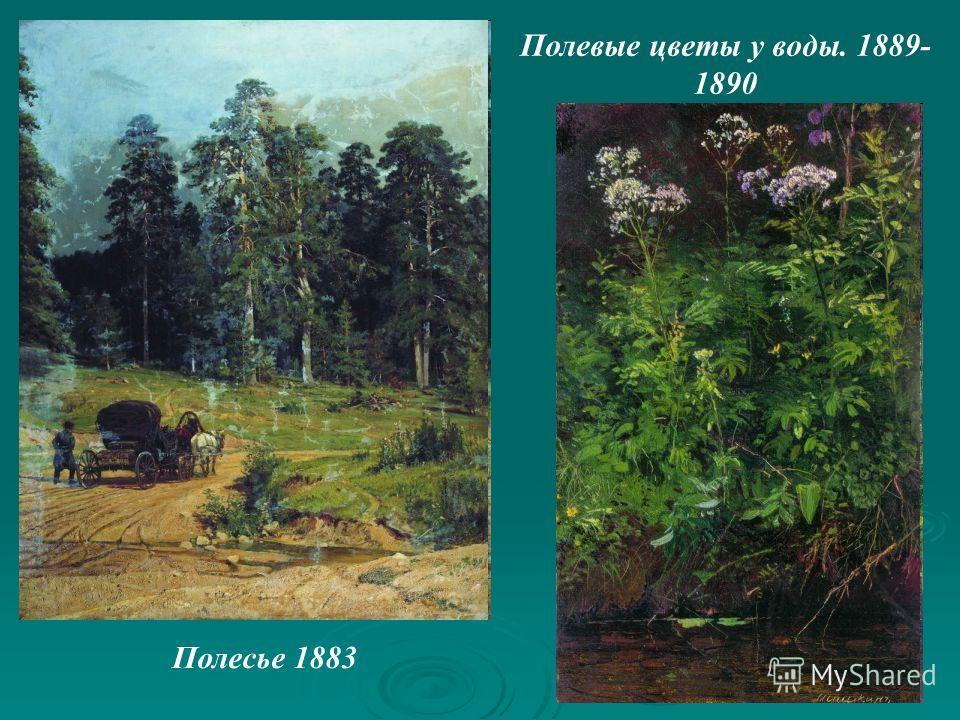 Полесье 1883 Полевые цветы у воды. 1889- 1890