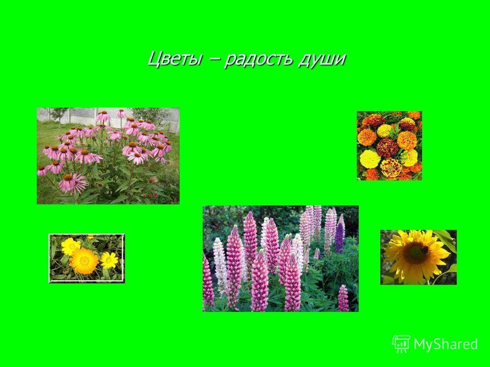 Цветы – радость души