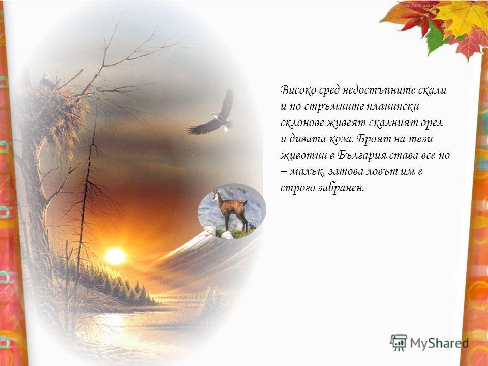 Високо сред недостъпните скали и по стръмните планински склонове живеят скалният орел и дивата коза. Броят на тези животни в България става все по – малък, затова ловът им е строго забранен.