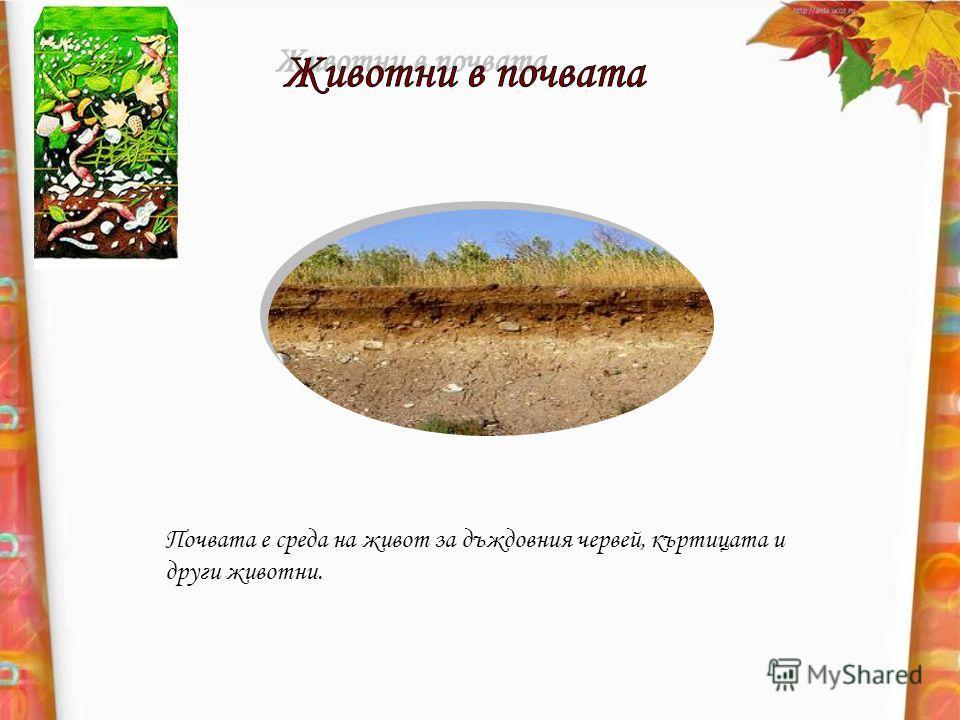 Почвата е среда на живот за дъждовния червей, къртицата и други животни.