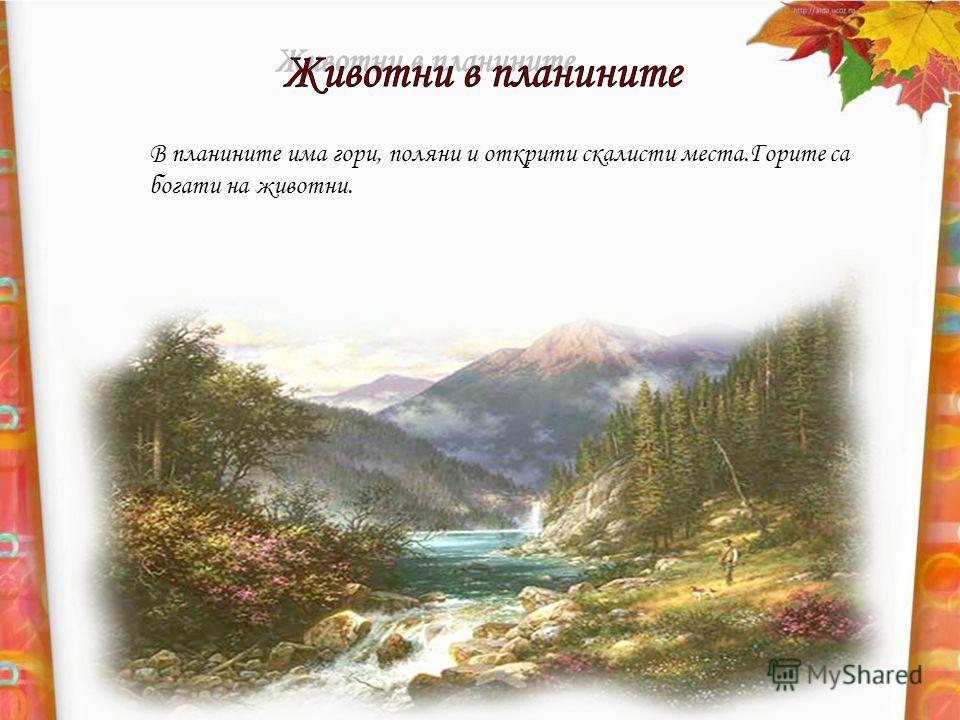 В планините има гори, поляни и открити скалисти места.Горите са богати на животни.