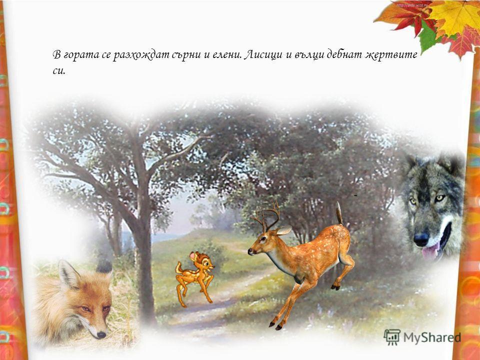 В гората се разхождат сърни и елени. Лисици и вълци дебнат жертвите си.