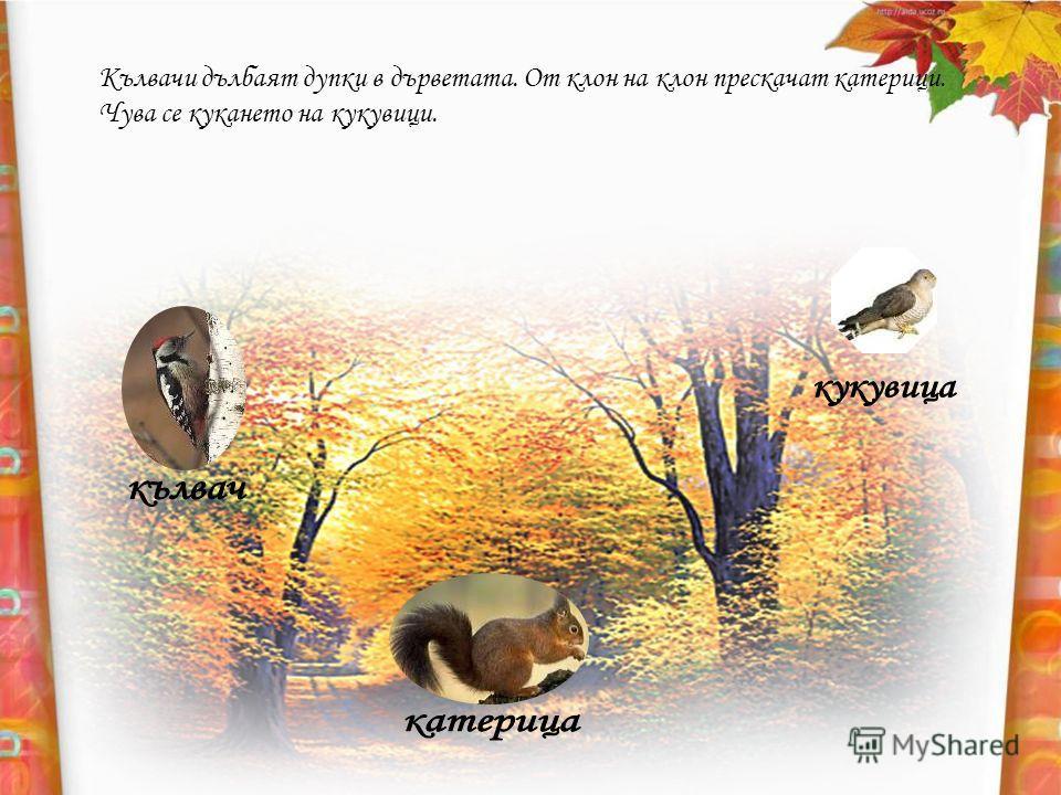 Кълвачи дълбаят дупки в дърветата. От клон на клон прескачат катерици. Чува се кукането на кукувици.