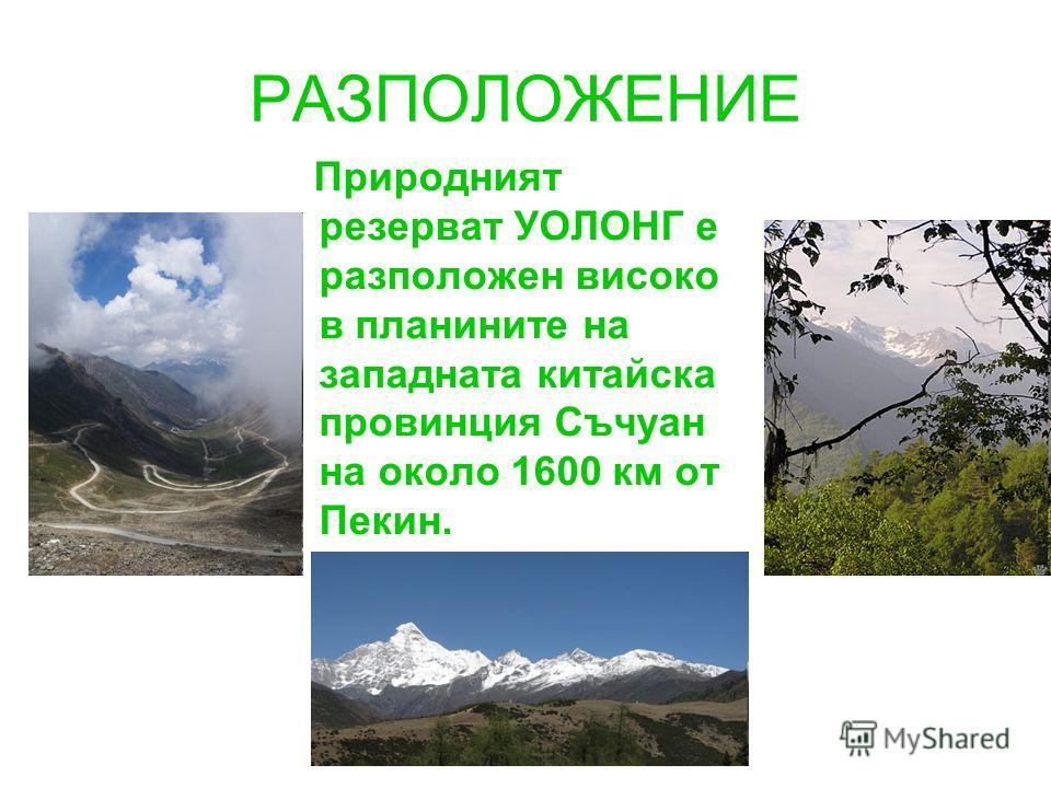 РАЗПОЛОЖЕНИЕ Природният резерват УОЛОНГ е разположен високо в планините на западната китайска провинция Съчуан на около 1600 км от Пекин.