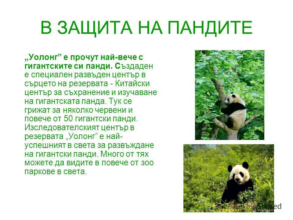 В ЗАЩИТА НА ПАНДИТЕ Уолонг е прочут най-вече с гигантските си панди. Създаден е специален развъден център в сърцето на резервата - Китайски център за съхранение и изучаване на гигантската панда. Тук се грижат за няколко червени и повече от 50 гигантс