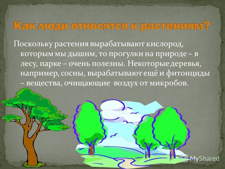 Поскольку растения вырабатывают кислород, которым мы дышим, то прогулки на природе – в лесу, парке – очень полезны. Некоторые деревья, например, сосны, вырабатывают ещё и фитонциды – вещества, очищающие воздух от микробов.