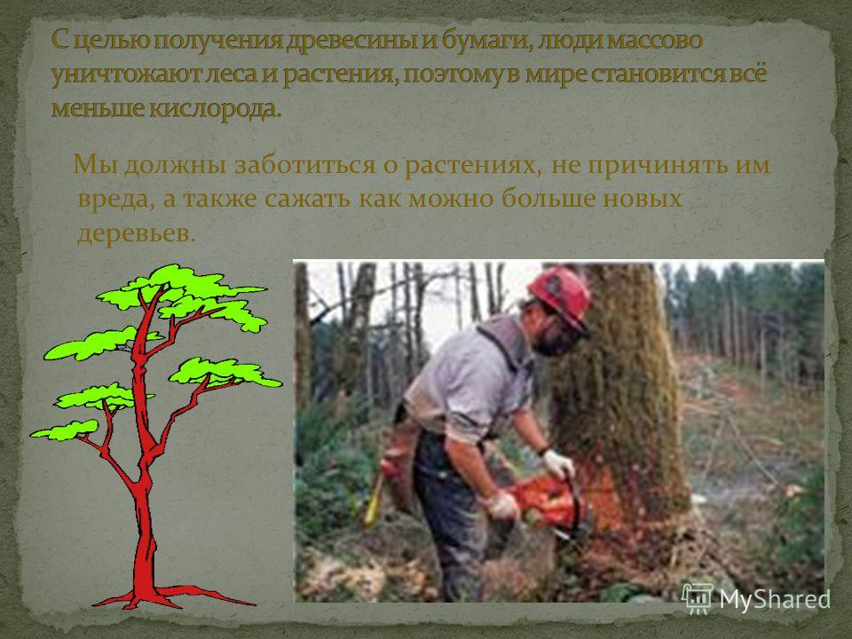 Мы должны заботиться о растениях, не причинять им вреда, а также сажать как можно больше новых деревьев.