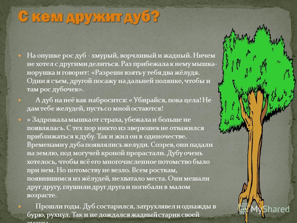 Зачем нужно сажать леса 51