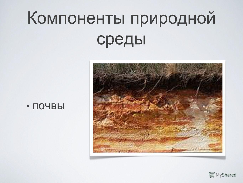 Компоненты природной среды почвы