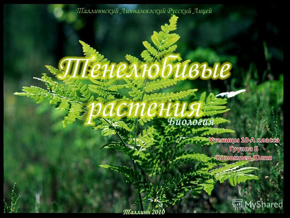 Таллиннский Линнамяэский Русский Лицей