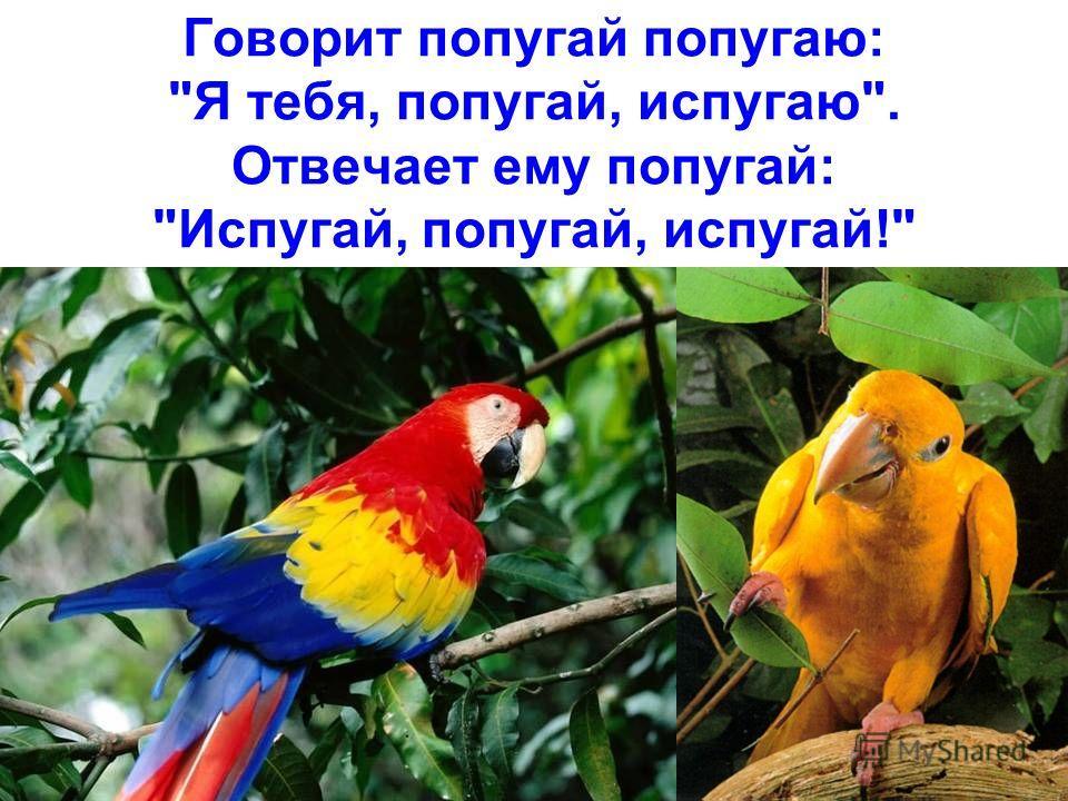 Говорит попугай попугаю: Я тебя, попугай, испугаю. Отвечает ему попугай: Испугай, попугай, испугай!