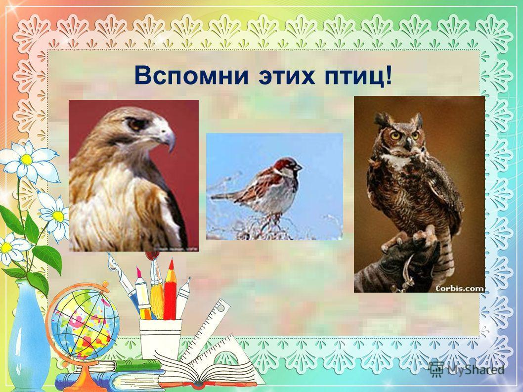 Вспомни этих птиц!