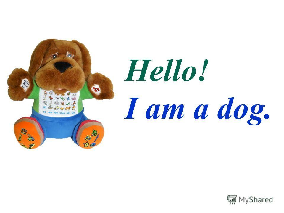 Hello! I am a pig.