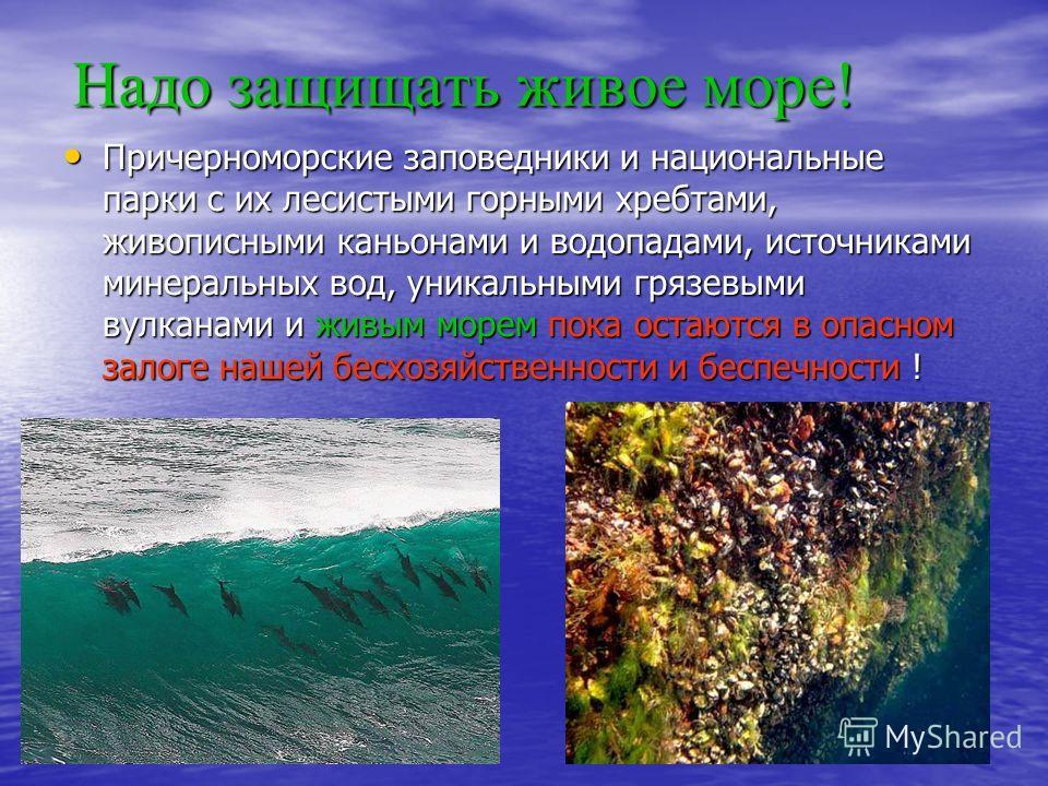 Надо защищать живое море! Причерноморские заповедники и национальные парки с их лесистыми горными хребтами, живописными каньонами и водопадами, источниками минеральных вод, уникальными грязевыми вулканами и живым морем пока остаются в опасном залоге