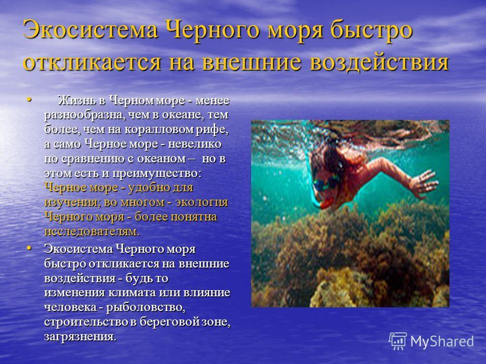 Экосистема Черного моря быстро откликается на внешние воздействия Жизнь в Черном море - менее разнообразна, чем в океане, тем более, чем на коралловом рифе, а само Черное море - невелико по сравнению с океаном – но в этом есть и преимущество: Черное