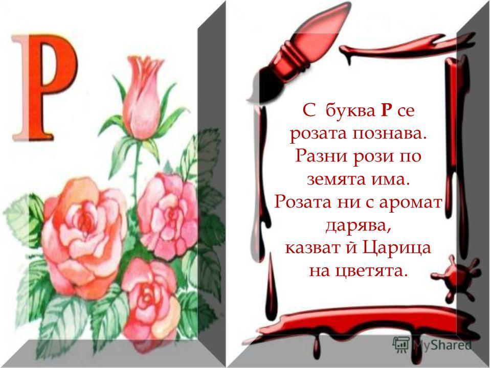 С буква Р се розата познава. Разни рози по земята има. Розата ни с аромат дарява, казват й Царица на цветята.