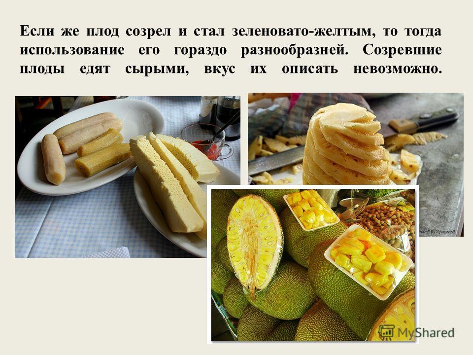 Если же плод созрел и стал зеленовато-желтым, то тогда использование его гораздо разнообразней. Созревшие плоды едят сырыми, вкус их описать невозможно.